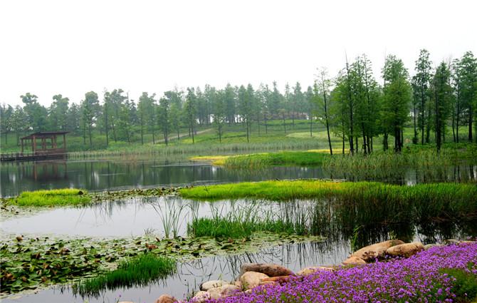 生态公园北区绿化工程